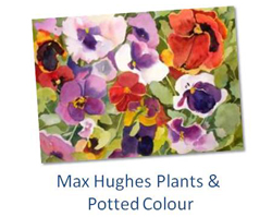 Max Hughes - Plants & Potted Colour